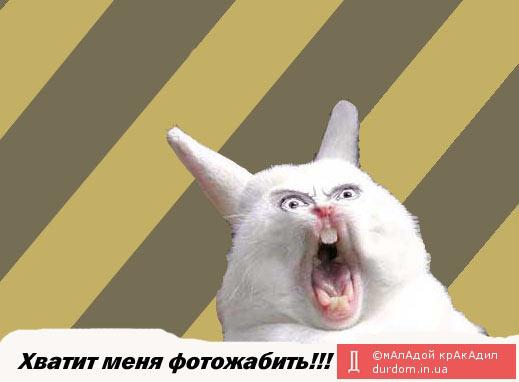 Яценюк поздравил всех защитников Украины с праздником - Цензор.НЕТ 3098